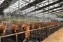 축산농가 폭염 피해 예방·대응 활동 강화